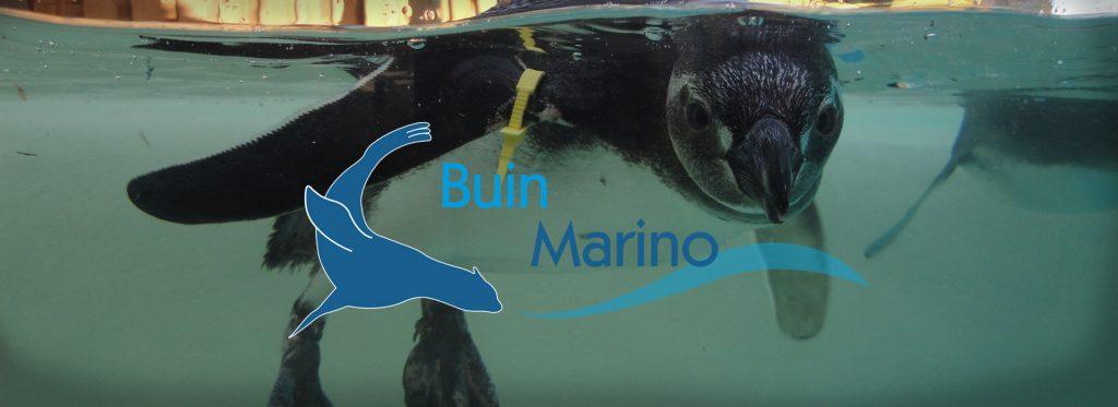 Buin Marino