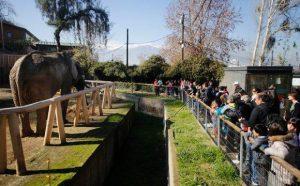 Elefantes del Zoológico Metropolitano