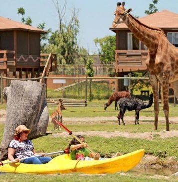 Safari de Rancagua